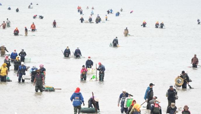 青岛:恰逢天文大潮 市民赶海忙