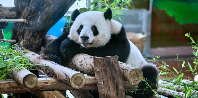 广州动物园部分室内场馆有序开放