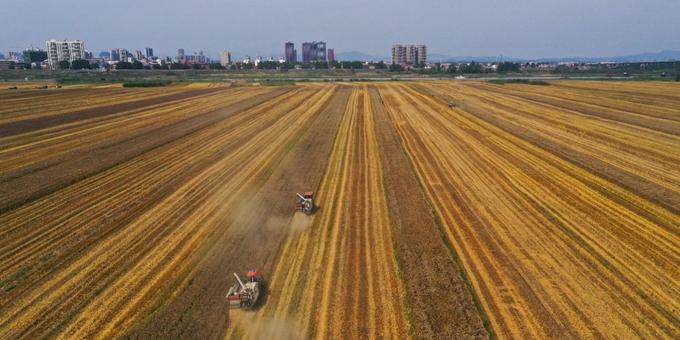 湖北:夏粮小麦喜获丰收