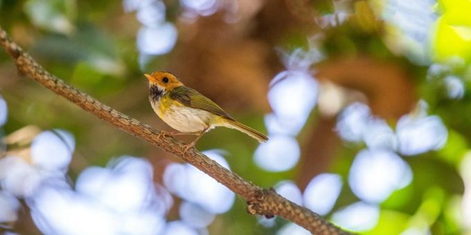 重庆南川:夏日鸟趣