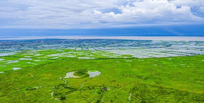 江苏泗洪:万顷湿地绿如海