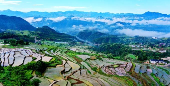 浙江台州:杨丰山云雾缥缈 千亩梯田景美如画