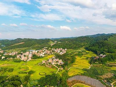 广西梧州:稻香四溢乡村如诗画