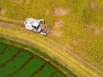 江西新余:新型优质早稻迎来丰收季