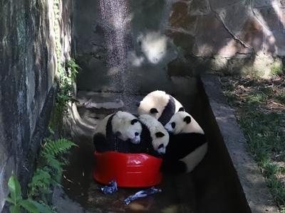 超有爱!重庆动物园花式妙招助动物清凉度夏
