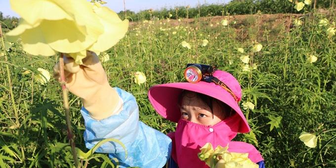 安徽巢湖:花开朵朵富农家