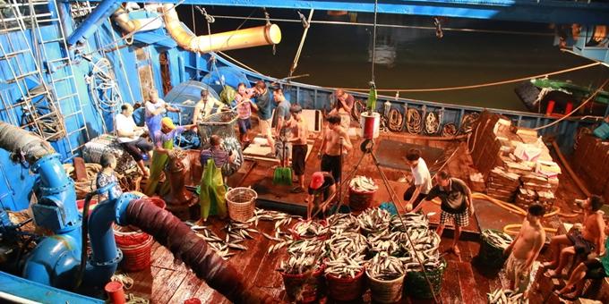 浙江玉环:渔船进港鱼满仓
