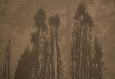 美俄勒冈州大规模山火持续 摧毁数千栋房屋