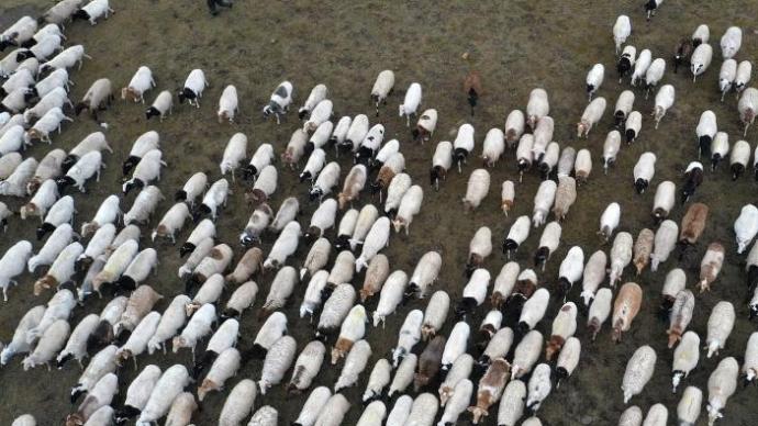 新疆巴音布鲁克草原牲畜秋季转场