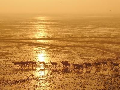 江苏大丰:麋鹿保护区秋日晨光美
