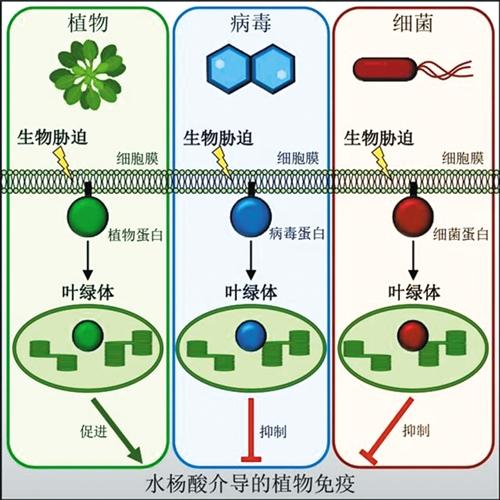 我国细胞膜信息传递研究获重大发现