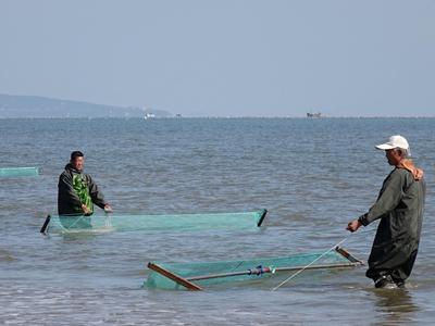 青岛:渔民独特捕虾方式尽现古朴渔家风情