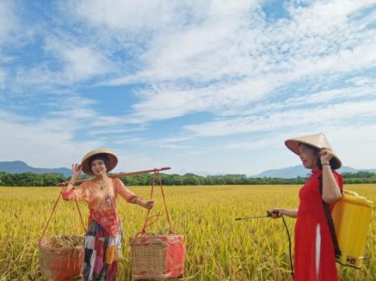 广州从化19万亩水稻进入收割期 预计总产量6.43万吨!