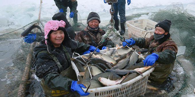 新疆呼图壁:冬日捕鱼供应市场