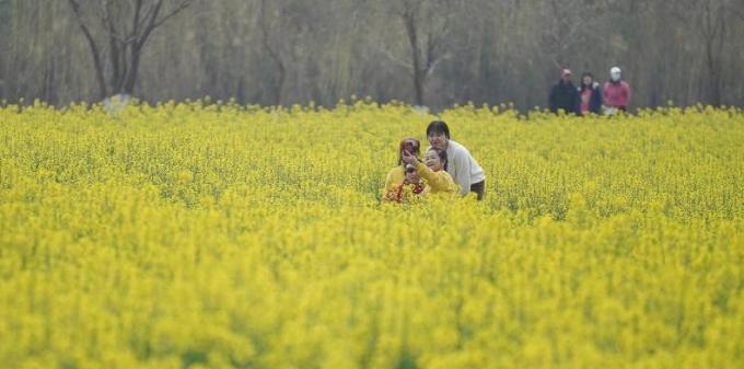 云南昆明:市民油菜花海找春天