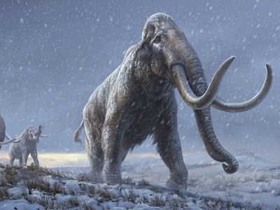 俄罗斯:科学家在西伯利亚发现100万年前猛犸象化石