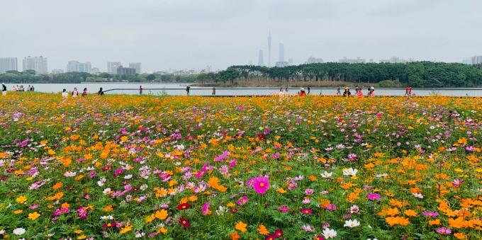 看,广州这个五彩斑斓的春天啊!