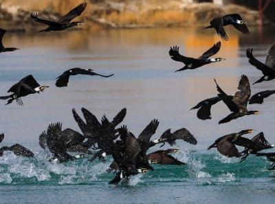 新疆巴音郭楞:博斯腾湖冰雪消融 候鸟春归