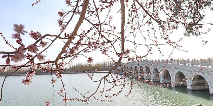 北京:桃花翠柳染西堤