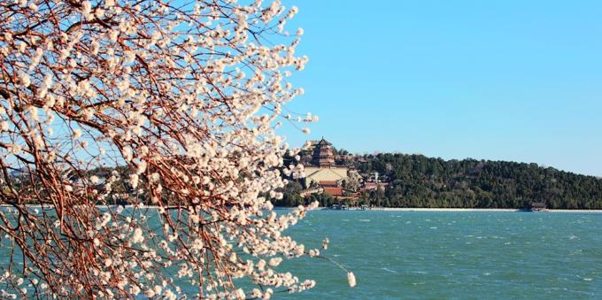 北京:颐和园西堤桃花盛开
