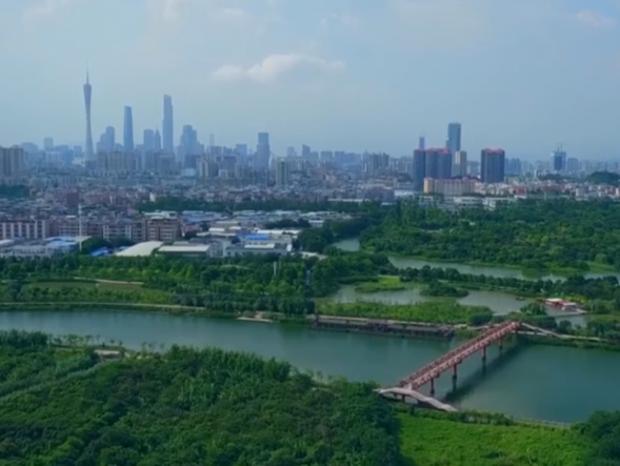 """广东广州:城市""""绿心"""" 大地花毯"""