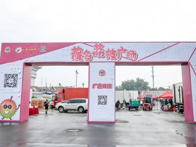 促成采购1.43万吨!茂名荔枝广场落户北京