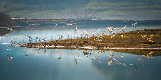 广西河池:白鹭舞翩跹