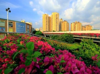 深圳现7万米超长花带